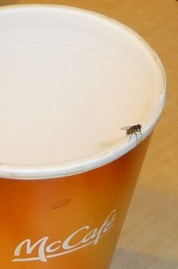 A Fly On The Rim of My Cup